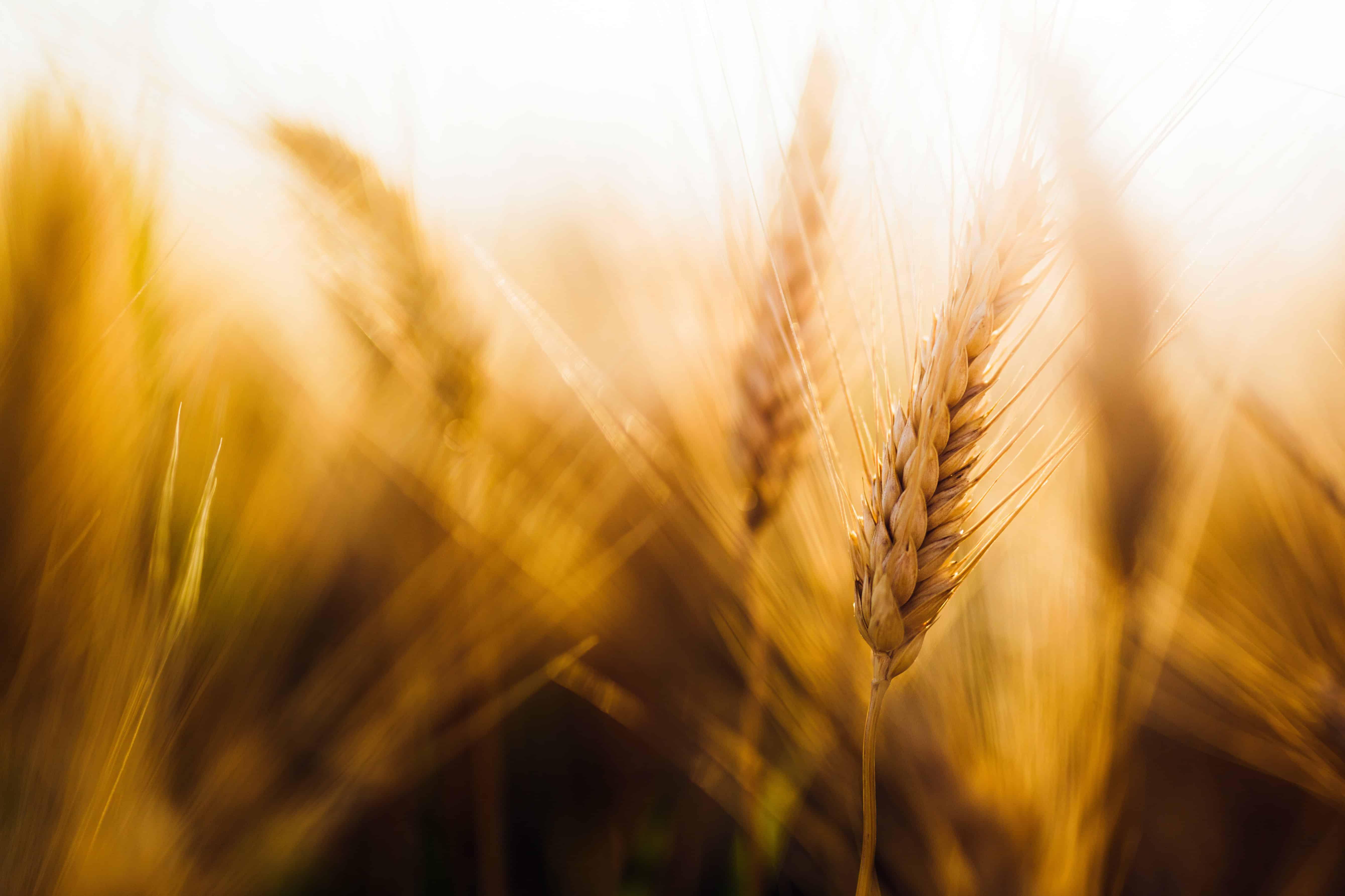 coeliac disease diagnosis tips gluten free diet